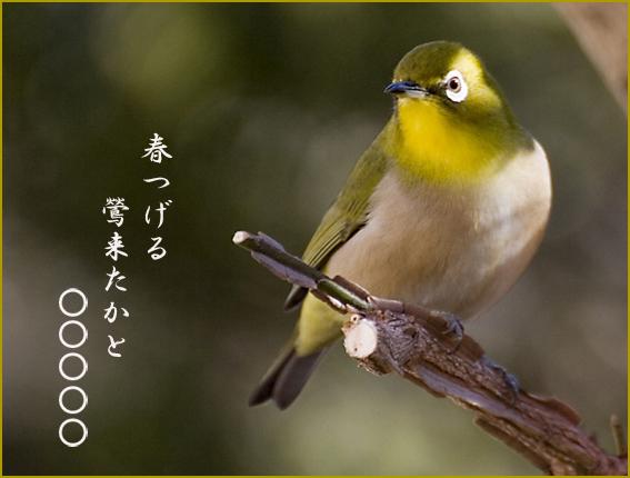 めじろ_川柳1.jpg